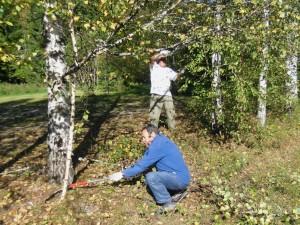Puiden leikkuuta Perheniemessä
